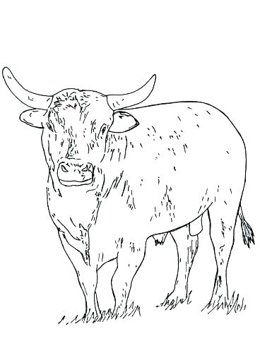 368x500 Chicago Bulls Coloring Pages Bulls Coloring Pages Bull Page Logo