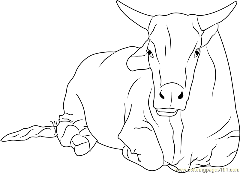 800x578 Sitting Bull Coloring Page