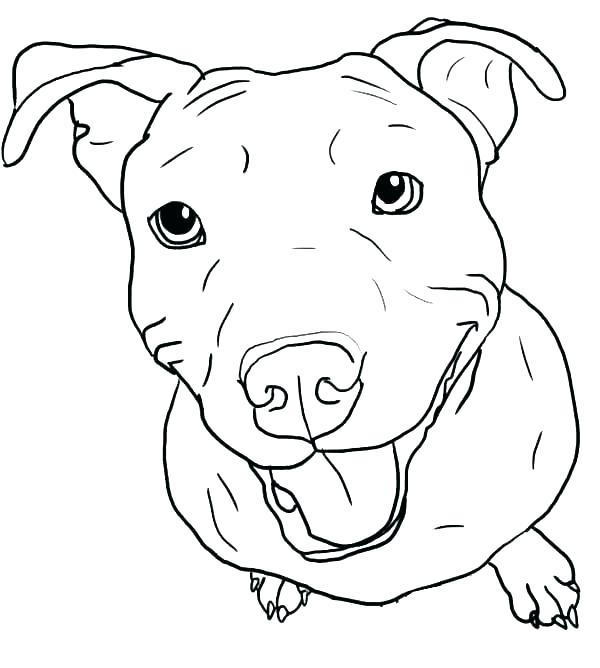 600x668 French Bulldog Coloring Pages