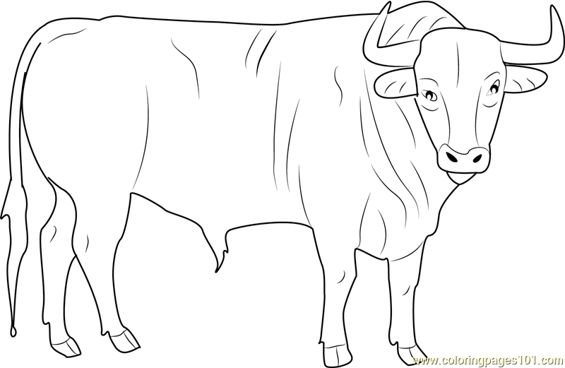 800x521 Black Bull Coloring Page