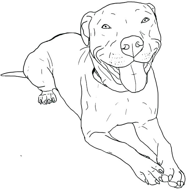 600x604 Pit Bull Coloring Pages Coloring Pages Pitbull Coloring Pages