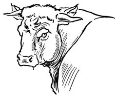 236x201 Bull Coloring Pages Color Horsesrodeo! Free