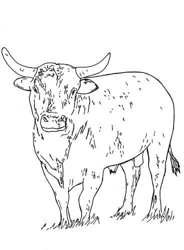 368x500 Bucking Bull Coloring Pages