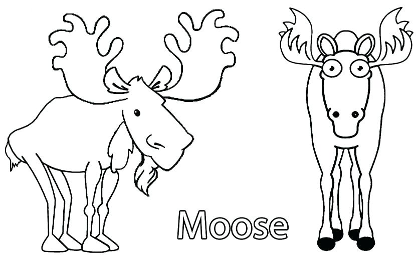 830x510 Coloring Pages For Kids Bulls Sheets Bull Elk And Baby Free Col