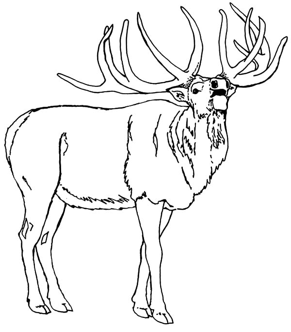 600x684 Download Online Coloring Pages For Free