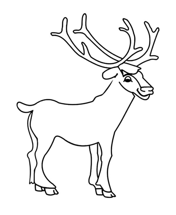 600x733 Drawing Young Elk Coloring Pages Drawing Young Elk Coloring Pages
