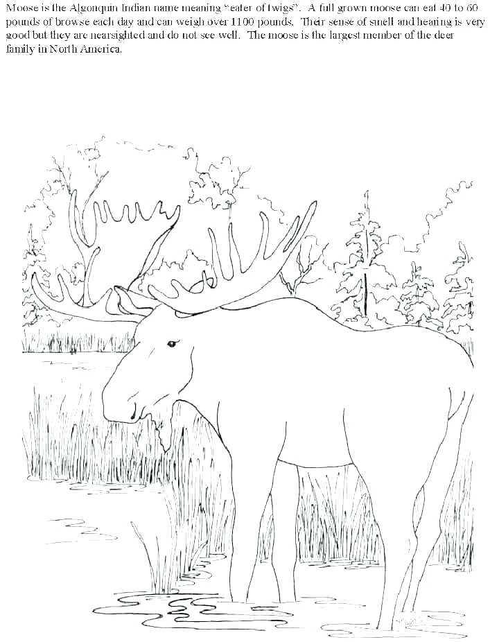 707x926 Elk Coloring Pages Bull Elk And Baby Elk Coloring Pages Elk
