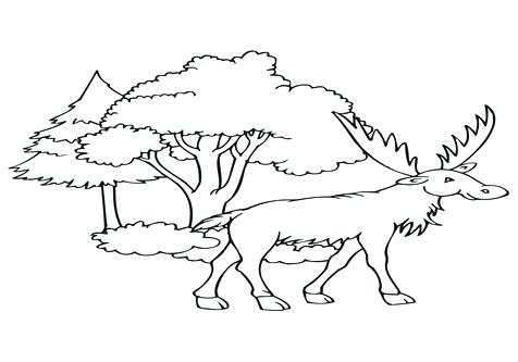 476x333 Elk Coloring Pages Bull Elk Coloring Pages Elk Coloring Pages