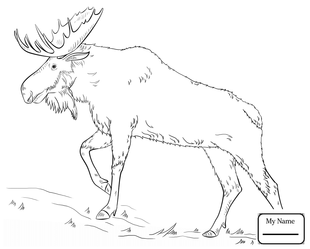 1060x850 Awesome Elk Coloring Pages Gallery Printable Coloring Sheet