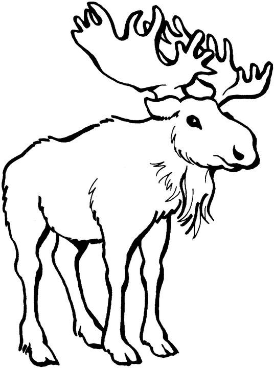 536x720 Tribal Bull Elk Coloring Pages Moose Clip Art Black And White