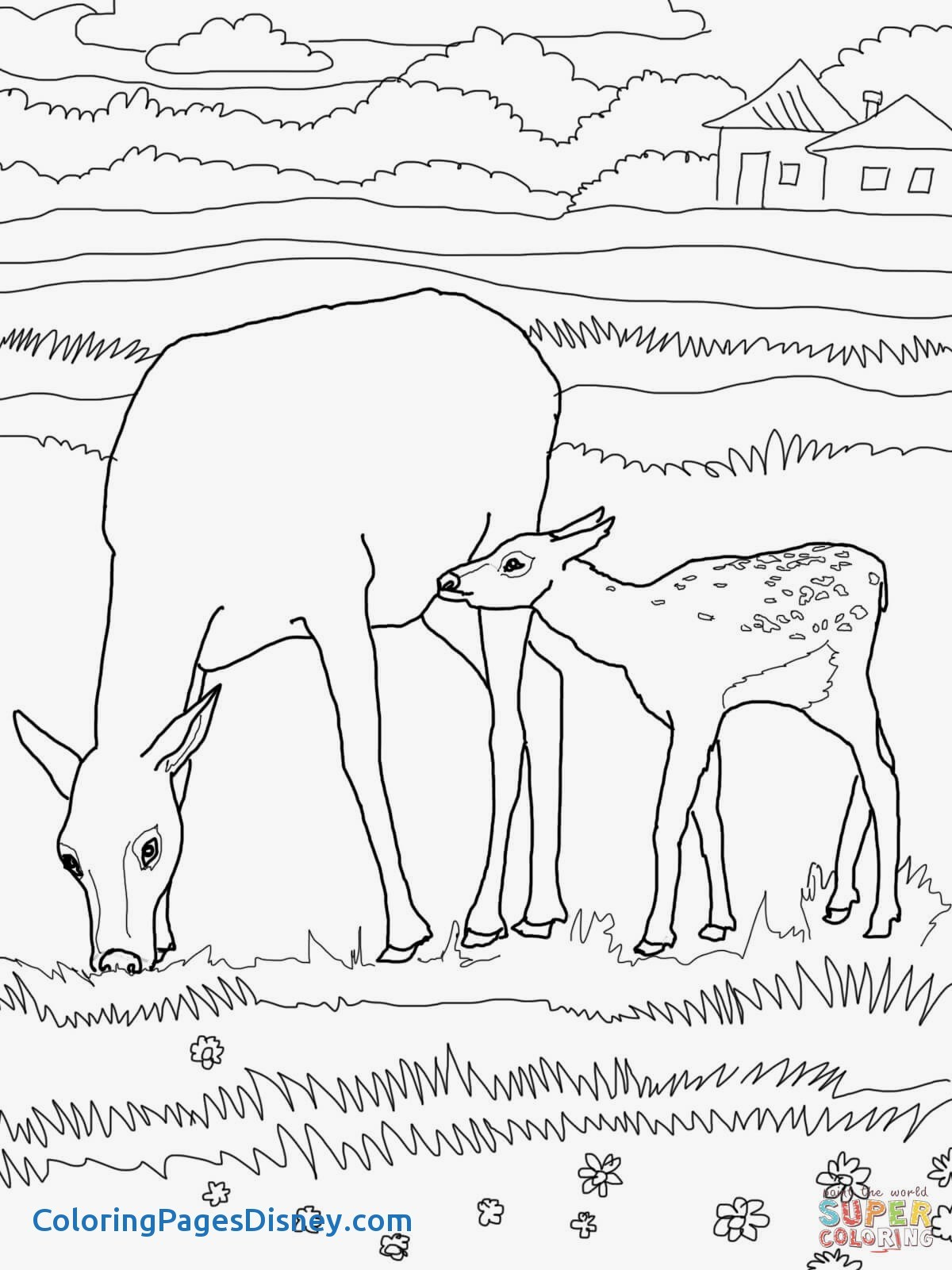 1200x1600 Wapiti Coloring Pages Unique Mother And Baby Elk Coloring Page