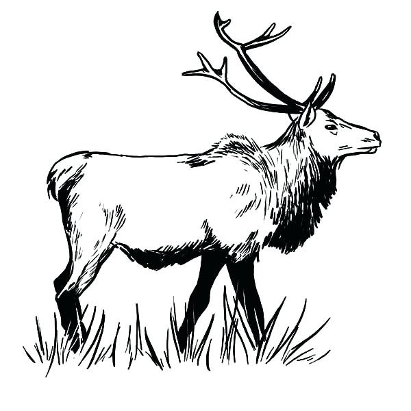 600x600 Awesome Elk Coloring Pages