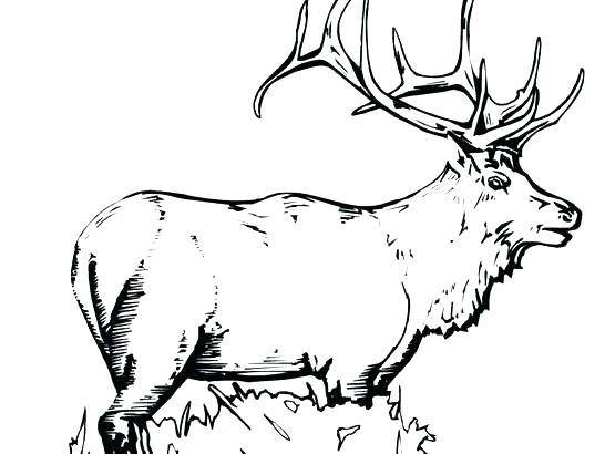 546x410 Elk Coloring Pages Printable Elk Coloring Pages Copertine Download