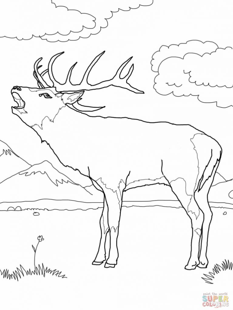 768x1024 Bull Elk Coloring Pages Download And Print For Free