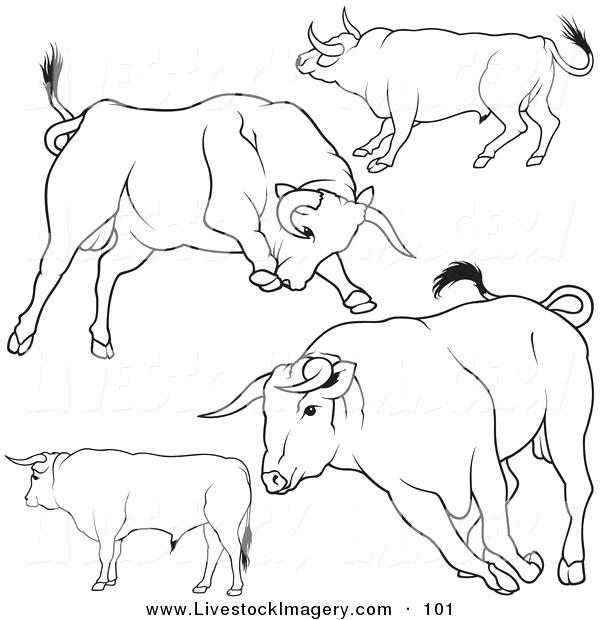 600x620 Bull Riding Coloring Pages Pbr Bull Riding Coloring Pages