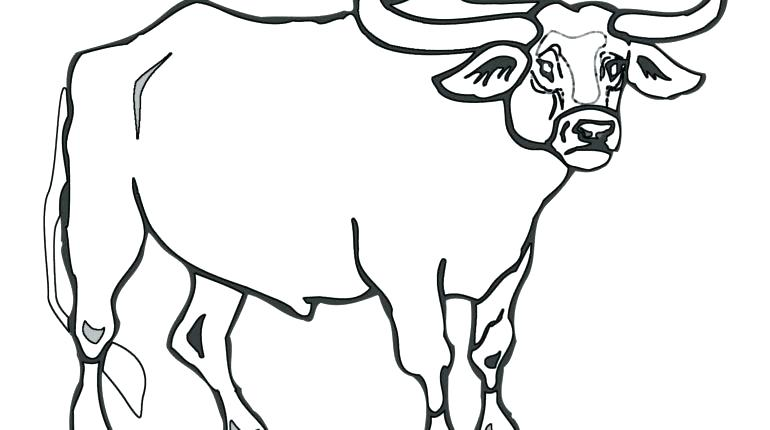 770x430 Bull Coloring Page Bull Riding Coloring Pages Rodeo Coloring Pages
