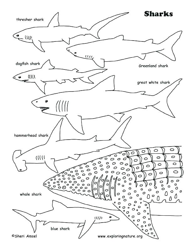 612x792 Bull Shark Coloring Sheets Pages Sharks Download And Print Whale