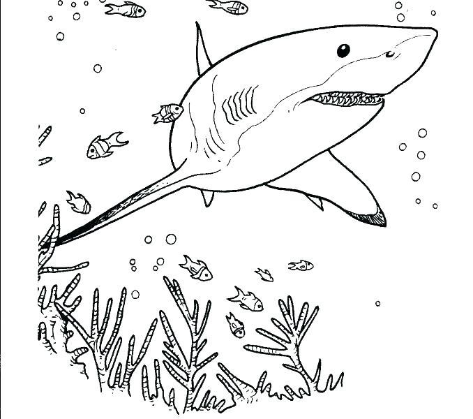 678x600 Bull Shark Coloring Sheets Shark Jaws Sketch Coloring Pages Shark