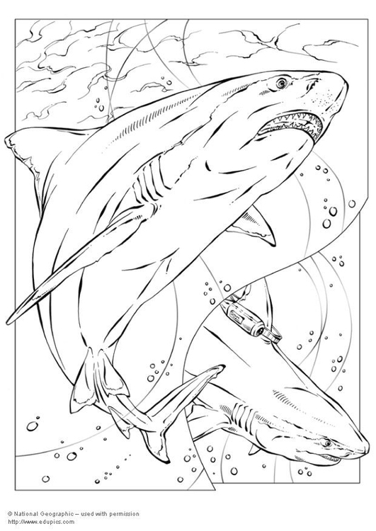 531x750 Coloring Page Bull Shark