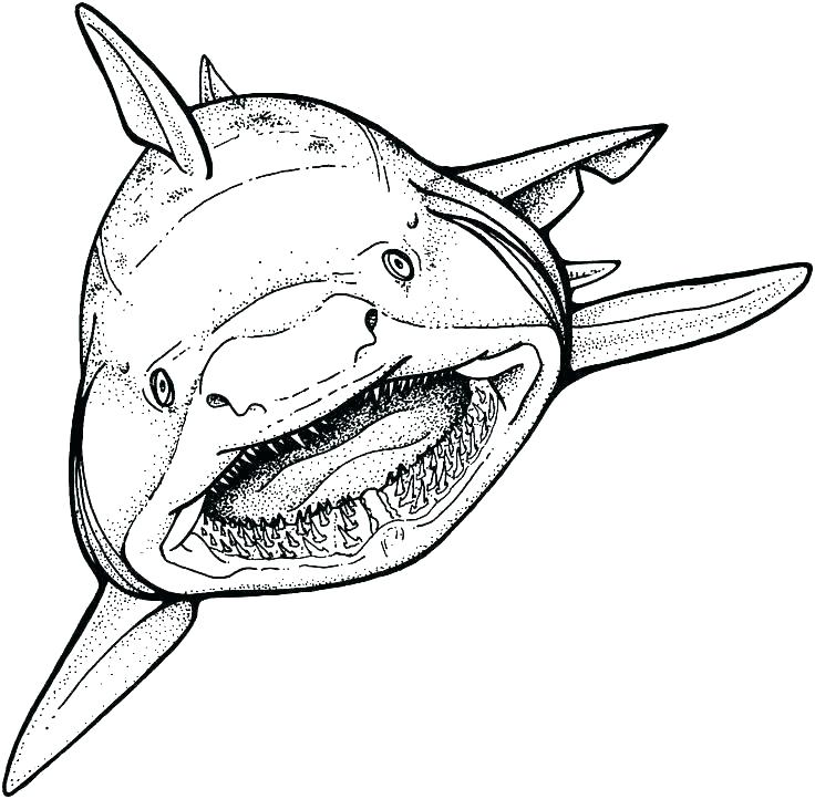 736x722 Free Shark Coloring Pages Shark Color Pages Shark Coloring Pages