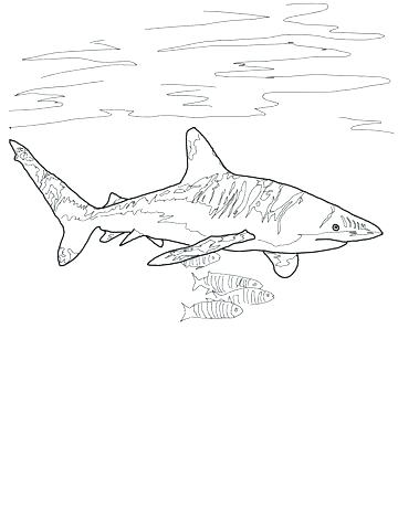 360x480 Great White Shark Coloring Page Great White Shark Coloring Page