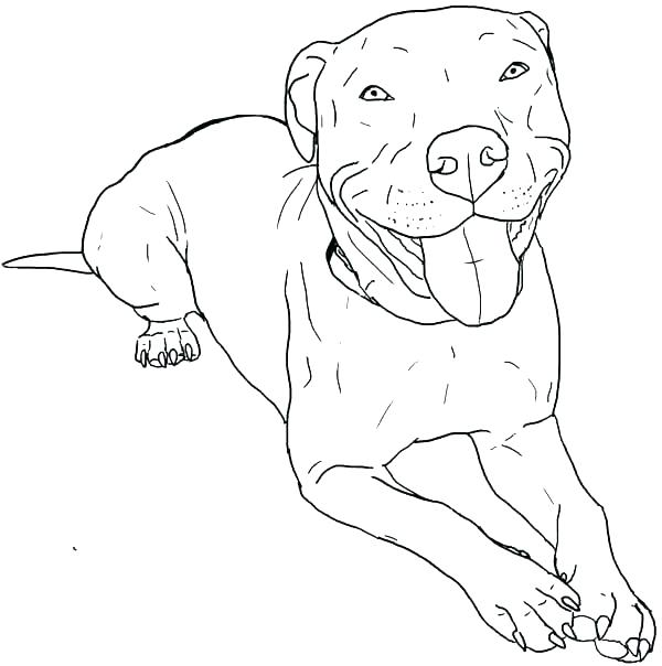 600x604 Bull Coloring Page Bull Coloring Page Bull Coloring Page Bull