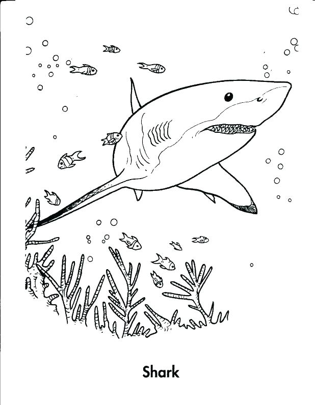 618x796 Great White Shark Coloring Pages And Pages Great White Shark Fish
