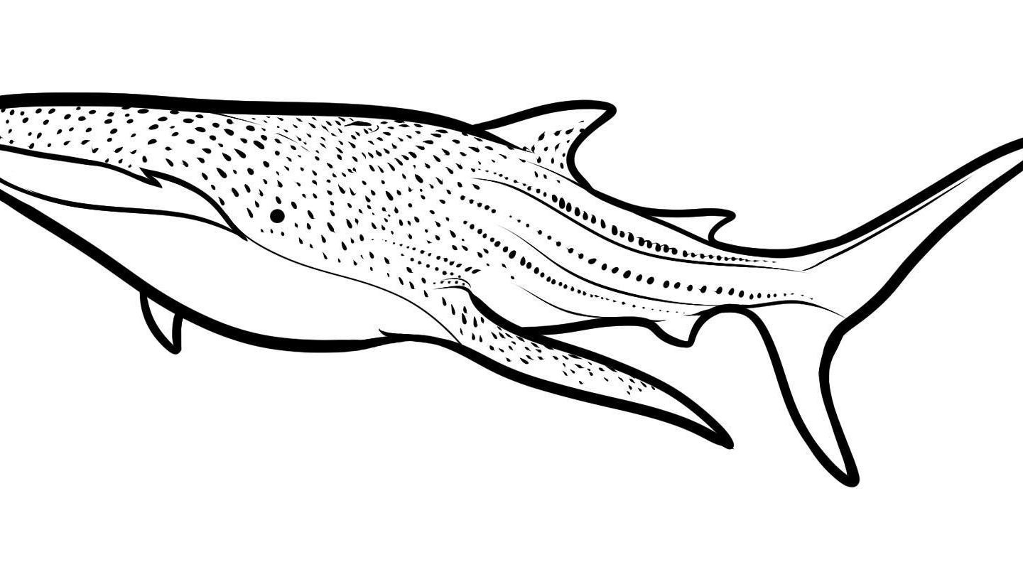 1440x798 Great White Shark Coloring Pages New Bull Shark Drawing