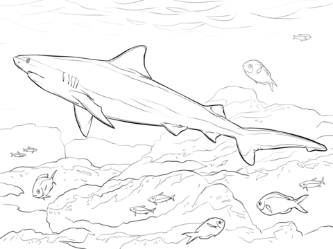 480x360 Realistic Bull Shark Coloring Page Coloring Pages
