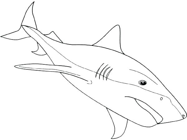600x450 Shark Color Page Bull Shark Labeled Tiger Shark Coloring Pages