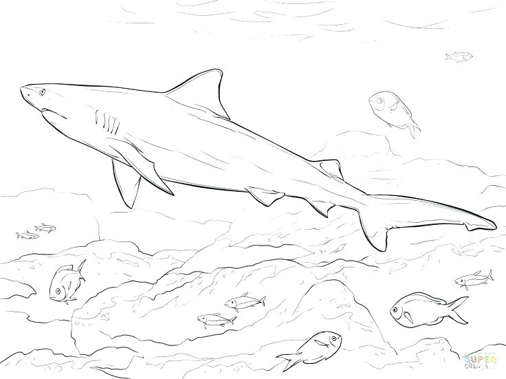 736x551 Sharks Coloring Pages Bull Shark Coloring Pages Realistic Bull