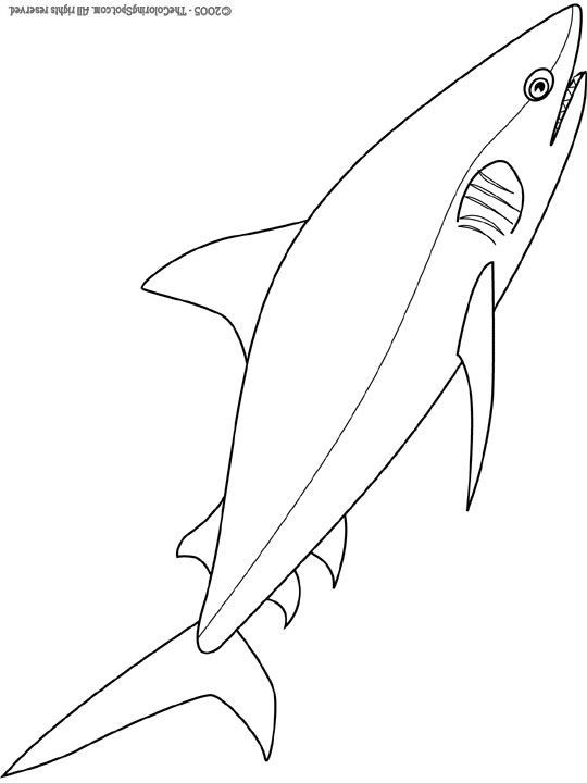 540x720 Bull Shark Coloring Pages Bull Shark Coloring Sheets Days