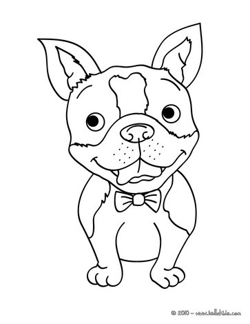 363x470 Bull Terrier Coloring Pages
