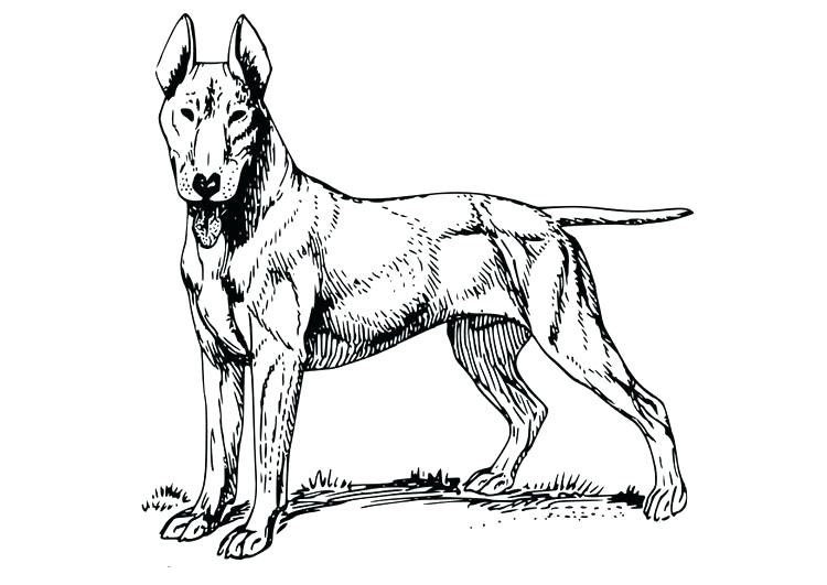 750x531 Coloring Page Dog Bull Terrier Coloring Page Dog Bull Terrier