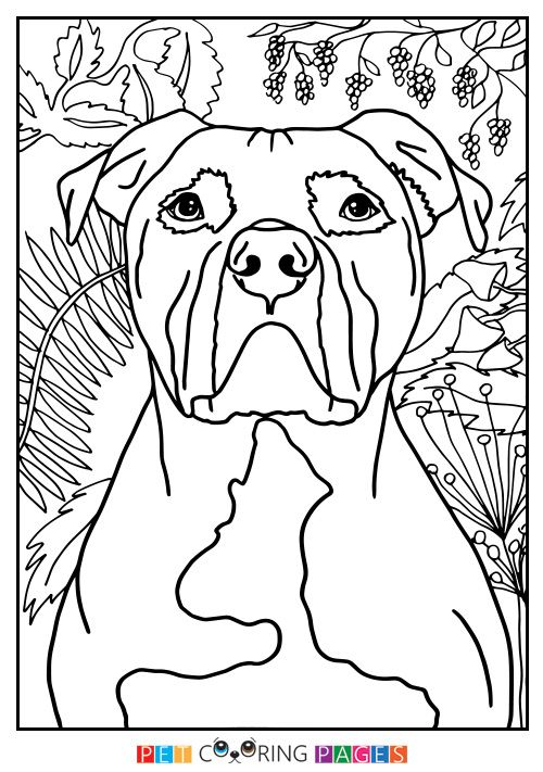 500x711 American Pit Bull Terrier Coloring Page Color Me Happy