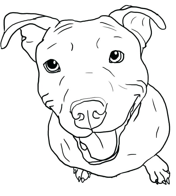 600x668 Pitbull Coloring Page Coloring Page Coloring Pages As Well As Free
