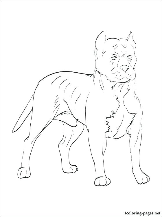 560x750 Pitbull Coloring Page Coloring Pages Coloring Pages Pit Bull