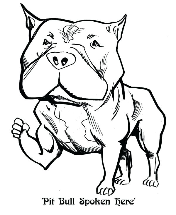 600x735 Pitbull Coloring Pages Coloring Page Coloring Page Pit Bull
