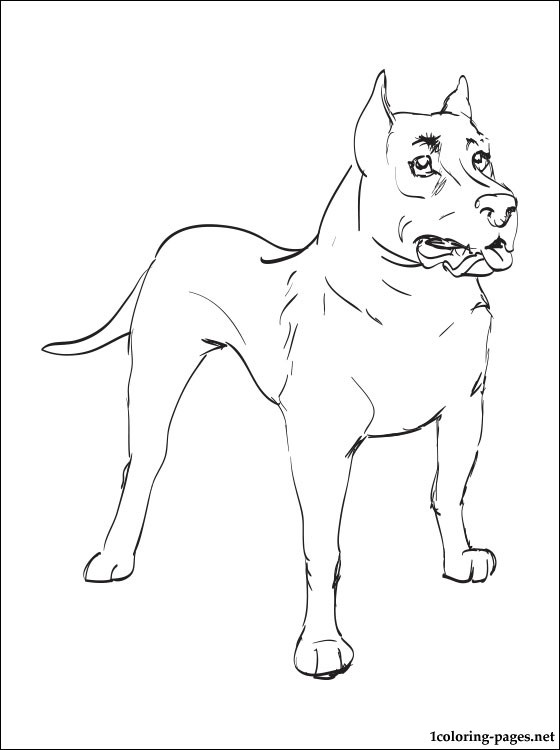 560x750 Staffordshire Bull Terrier Coloring Page Coloring Pages