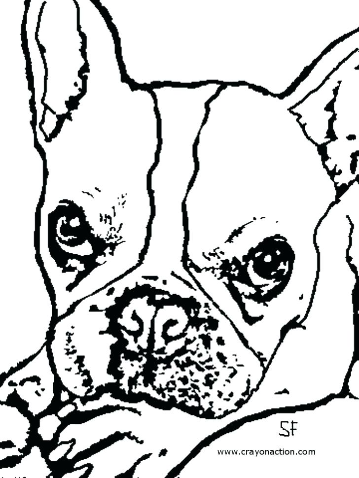 728x970 French Bulldog Coloring Pages Bulldog Coloring Pages French
