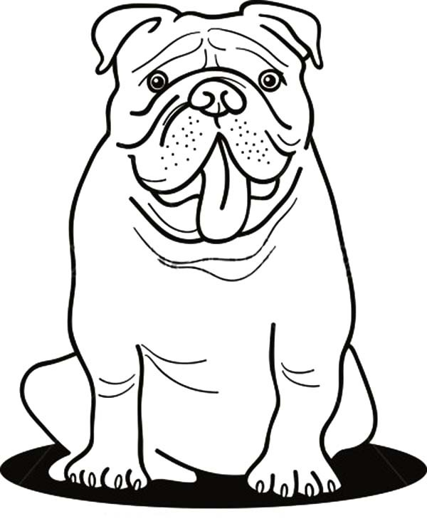 600x746 Funny Bulldog Coloring Pages Best Place To Color