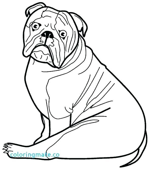 600x668 Bulldog Coloring Pages Printable Bulldog Coloring Pages Go Bulldog