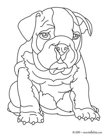 364x470 Bulldog Coloring Pages