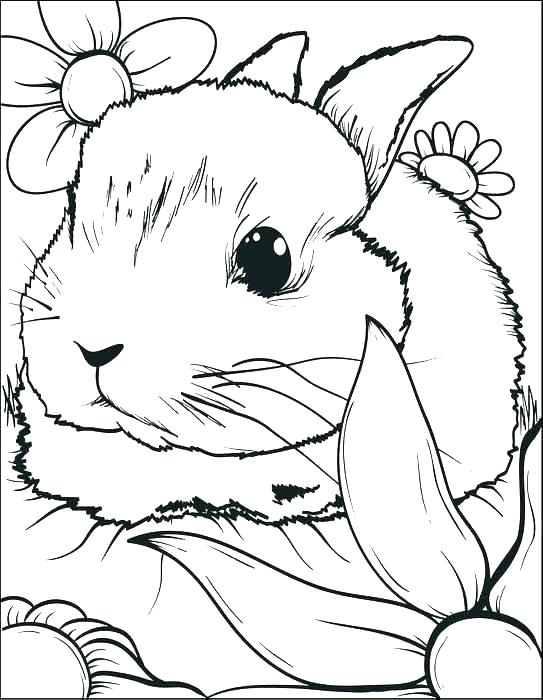543x700 Rabbit Coloring Page Rabbit Coloring Page Bunny Coloring Pages