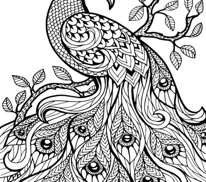 678x600 Color Book Pages Free Coloring Page