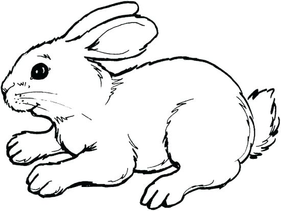 550x413 Easter Bunny Coloring Pages To Print