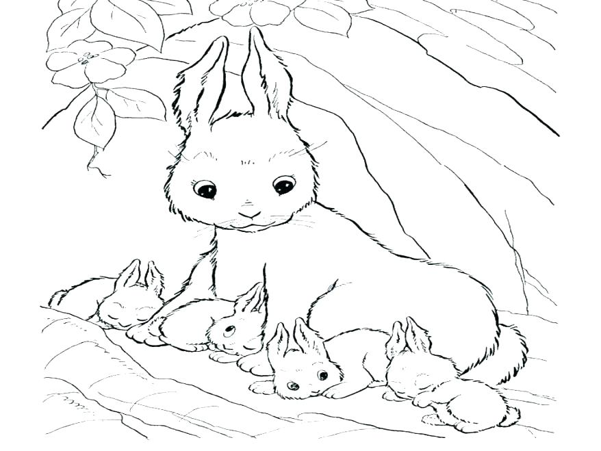 878x659 Baby Bunny Coloring Pages Rabbit Coloring Pages Free Printable