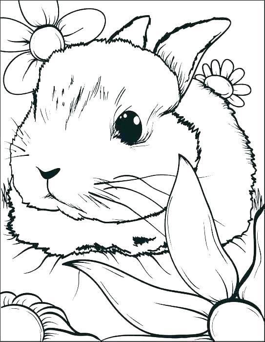 543x700 Bunny Color Page