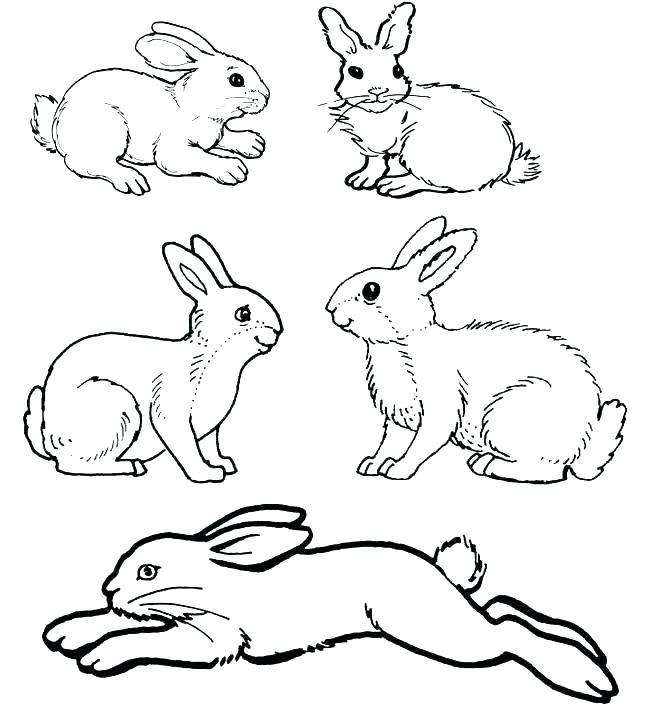 650x706 Rabbits Coloring Pages