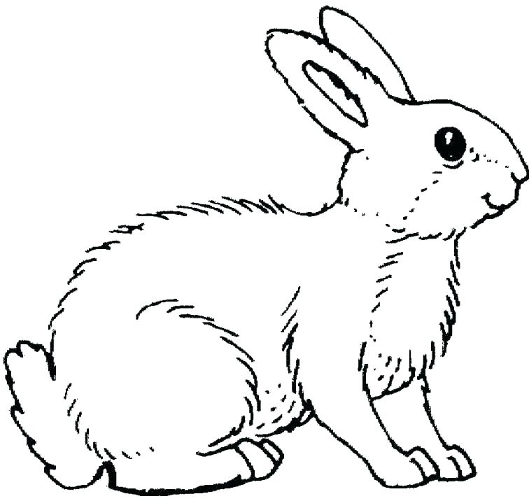 756x716 Bunny Rabbit Coloring Pages Bunny Rabbit Coloring Page Bunny